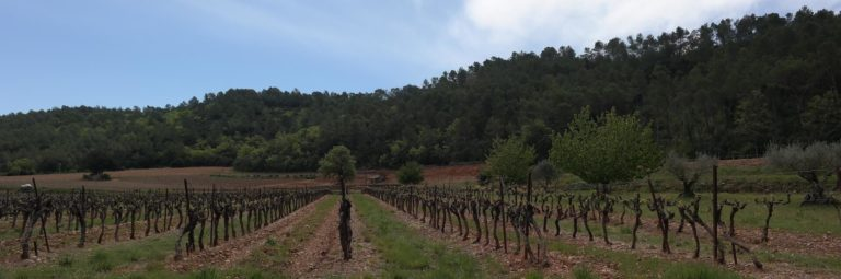 vignes d'un domaine viticole var
